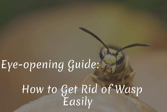 Get Rid of Wasp